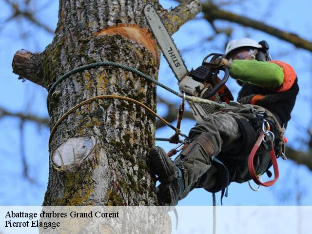 Abattage d'arbres  grand-corent-01250 Pierrot Elagage